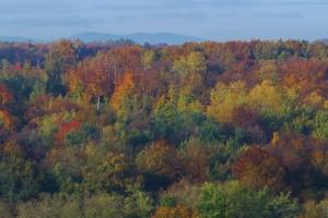 Merveilleuses couleurs d'automne