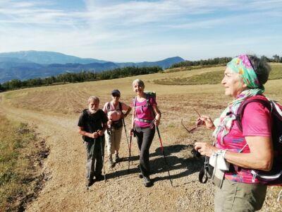 nouveaux champs de lavandes sur le chemin du col de Soubeyrand