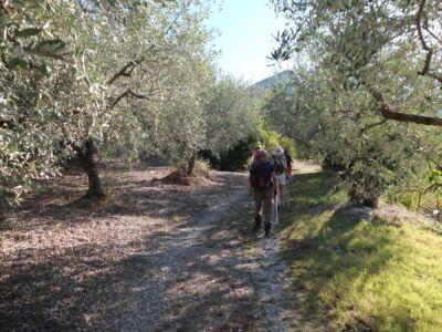 Descente vers Sahune au milieu des oliviers